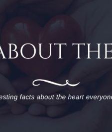 fun facts about the heart